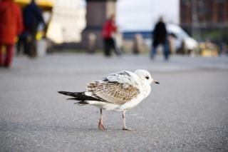 Uccello, con2011