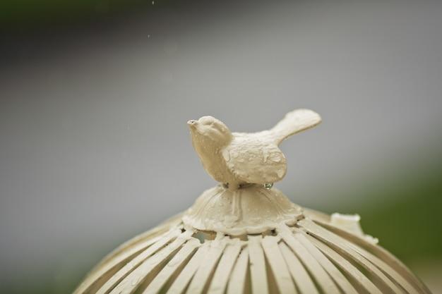 Uccello d'acciaio bagnato sulla parte superiore di una gabbia