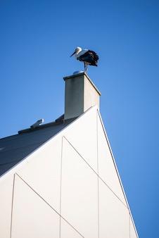 Uccello della cicogna in cima al camino sul cielo blu