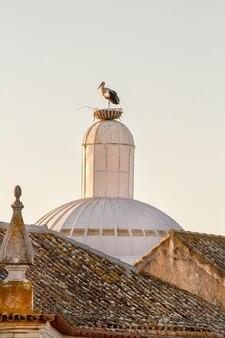 Uccello di cicogna bianca sola sulla cima di un tetto in città.