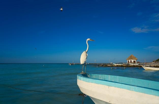 Uccello e barca dell'airone dell'isola di holbox in una spiaggia