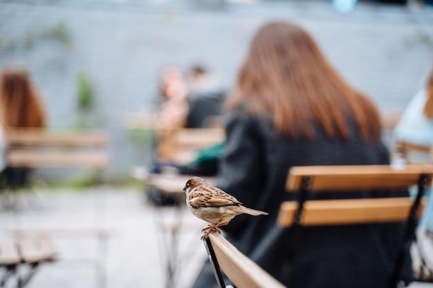 Uccello in città. passero che si siede sulla tavola in caffè all'aperto