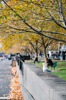 Uccello in città