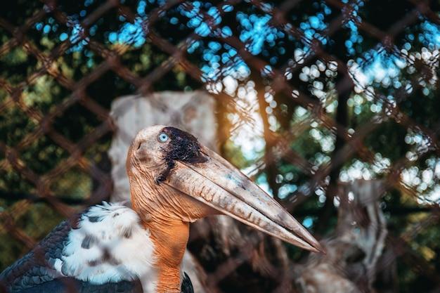 Uccello in gabbia con sfondo.