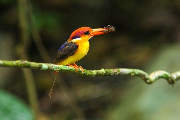 Uccello in natura