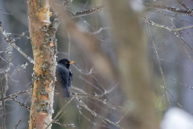 Uccello nero seduto sul ramo di un albero