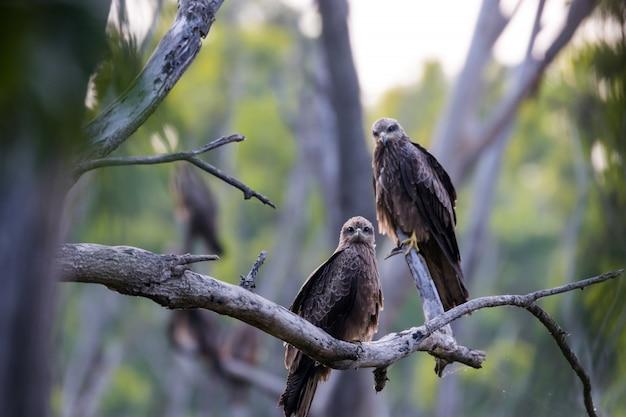 Uccello nero su un ramo
