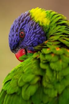 Uccello pappagallo animale e macaw