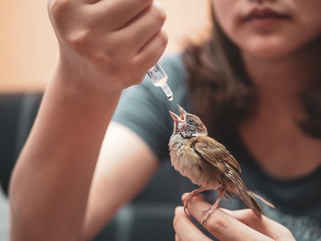 Uccello passero intelligente e carino