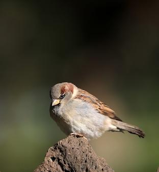 Uccello seduto su una roccia con uno sfondo sfocato