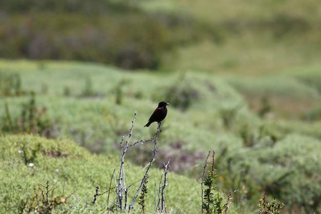 Uccello selvatico in piedi su un piccolo bastone su un campo di cespugli