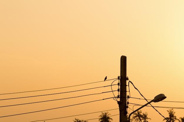 Uccello. sera. tramonto. palo elettrico