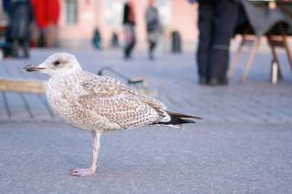 Uccello sguardo