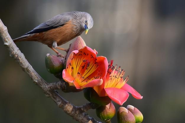 Uccello su un ramo di un albero