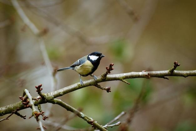 Uccello su un ramo