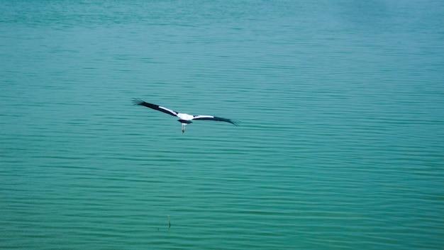 Uccello volare sopra i mari