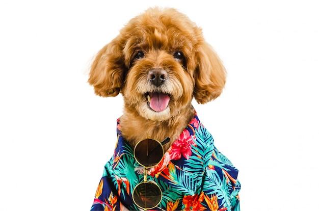 Un adorabile barboncino nero che indossa camicia hawaiana e occhiali da sole