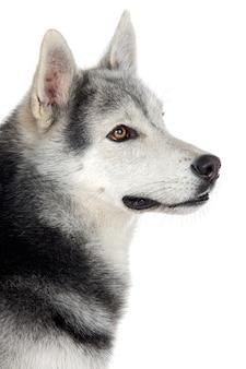 Un adorabile cane su sfondo bianco