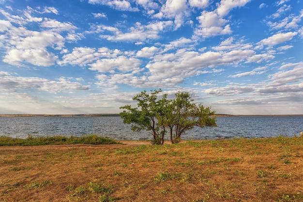 Un albero solitario sorge sulla riva di un lago, fiume, contro un bel cielo con nuvole bianche e acqua blu e gialla con erba verde