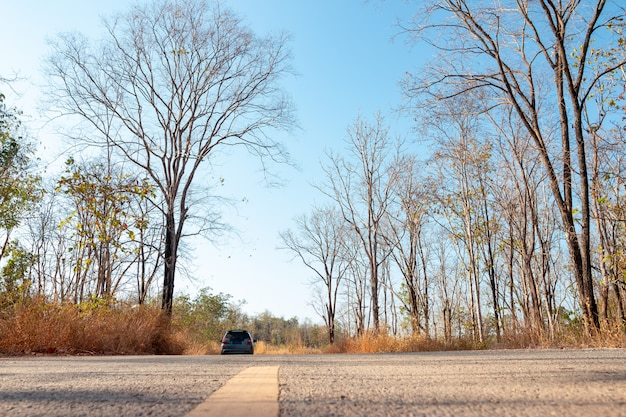 Un'auto parcheggiata lungo la strada nella foresta in una giornata limpida di cielo blu.