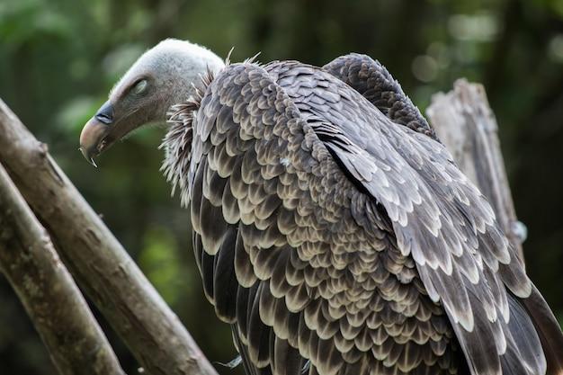 Un avvoltoio appollaiato su un ramo di un albero