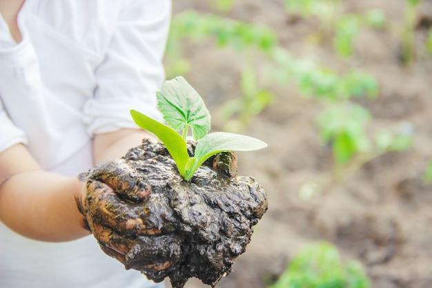 Un bambino pianta una pianta nel giardino. messa a fuoco selettiva