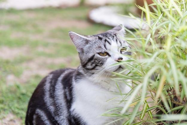 Un bel gatto con albero di bambù, pianta di medicina naturale per gatti