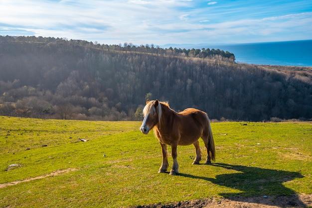 Un bellissimo cavallo in libertà dal monte di jaizkibel vicino a san sebastian, gipuzkoa. spagna