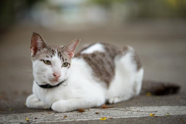 Un bellissimo gatto è seduto per terra