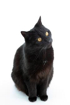 Un bellissimo gatto nero si pone