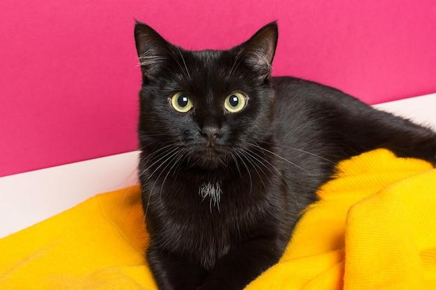 Un bellissimo simpatico gatto nero giace su un plaid di lana giallo brillante a casa. prendersi cura degli animali.