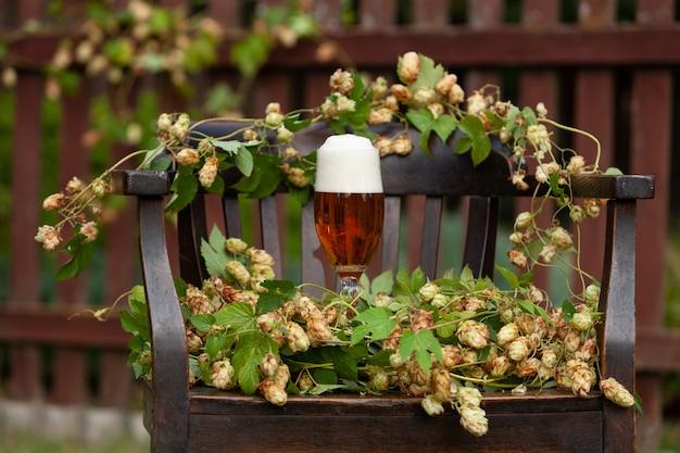 Un bicchiere di birra fresca e una pianta di luppolo. concetto per la festa della birra, oktober fest.