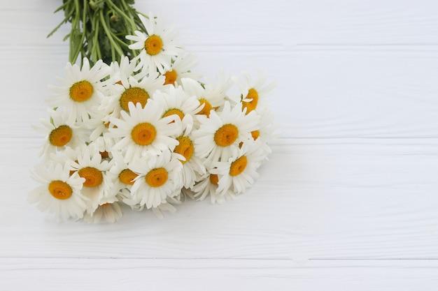 Un bouquet di camomiles close-up si trova su uno sfondo bianco, vista dall'alto