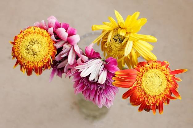 Un bouquet in dissolvenza di gerbere multicolori in un vaso trasparente