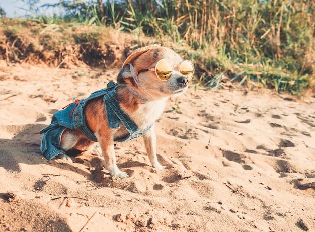 Un cagnolino alla moda vestito da chihuahua riposa nella natura, guarda l'acqua e gode della libertà