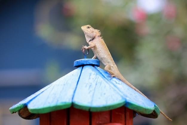 Un camaleonte in piedi su un palo