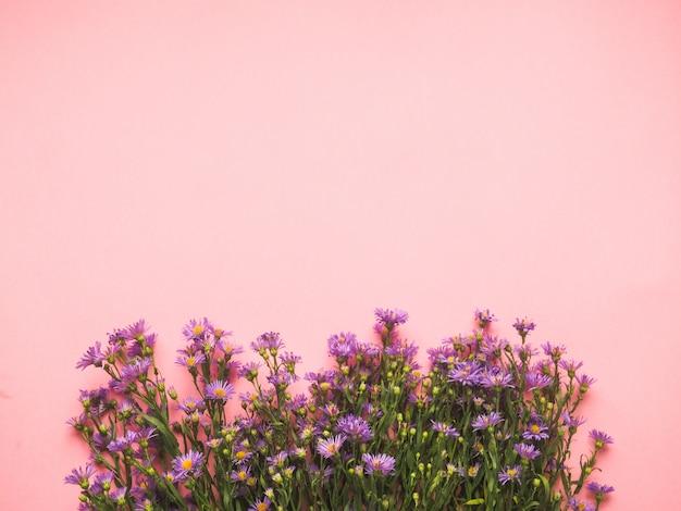 Un campo di piccoli fiori blu su uno sfondo rosa