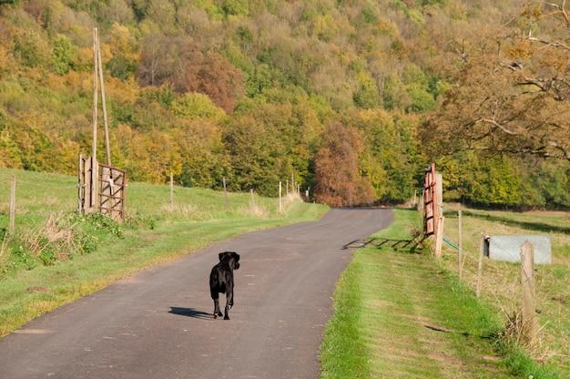 Un cane che cammina su una strada