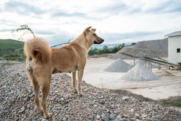 Un cane di fabbrica concreto