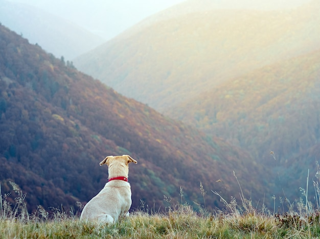 Un cane in montagna.