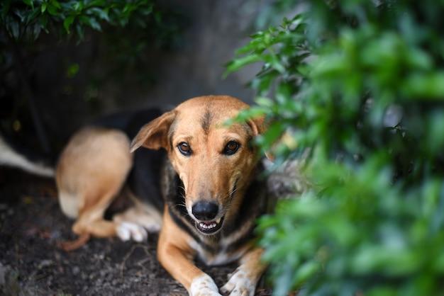 Un cane marrone e nero che riposa sotto il cespuglio verde in una giornata calda e soleggiata.