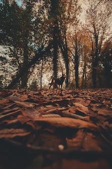 Un cane nel mezzo della foresta autunnale