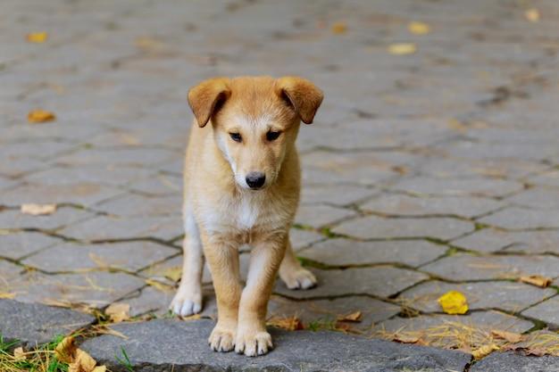 Un cane randagio abbandonato e senzatetto è in piedi in strada.