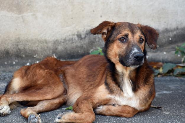 Un cane randagio di strada. il problema degli animali randagi di strada.