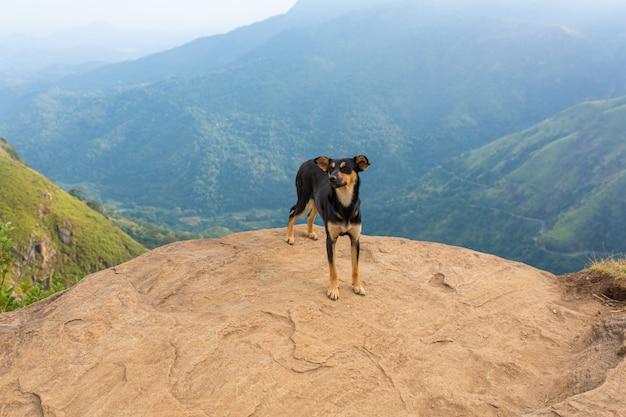 Un cane si trova sul bordo di una scogliera in montagna
