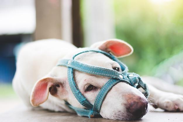 Un cane triste con un muso disteso a terra accanto alla porta di casa all'aperto