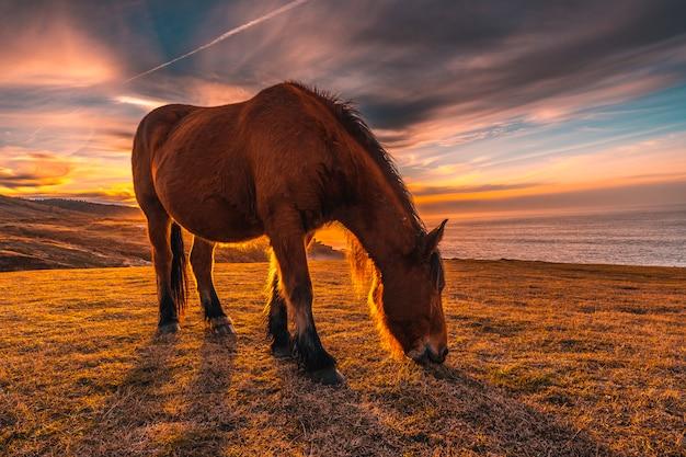 Un cavallo al tramonto da jaizkibel alato da san sebastian con il sole. paesi baschi