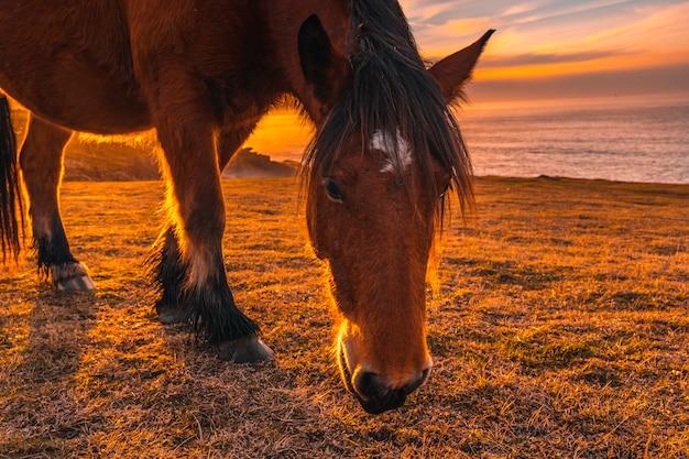 Un cavallo al tramonto da jaizkibel alato da san sebastian. paesi baschi