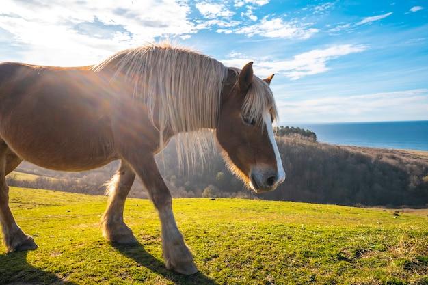 Un cavallo libero dalla montagna di jaizkibel che cammina vicino a san sebastian, gipuzkoa. spagna