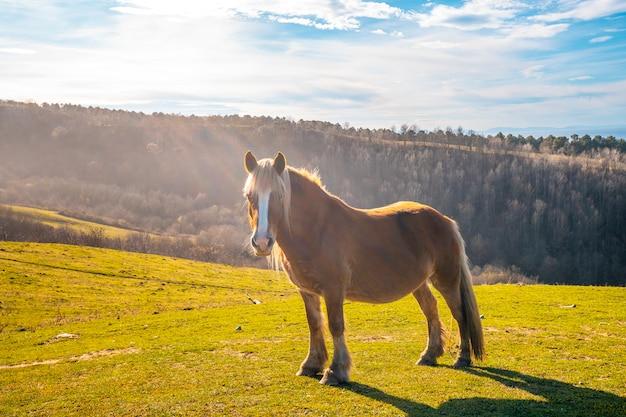 Un cavallo libero dalla montagna di jaizkibel vicino a san sebastian, gipuzkoa. spagna
